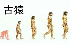人类的起源