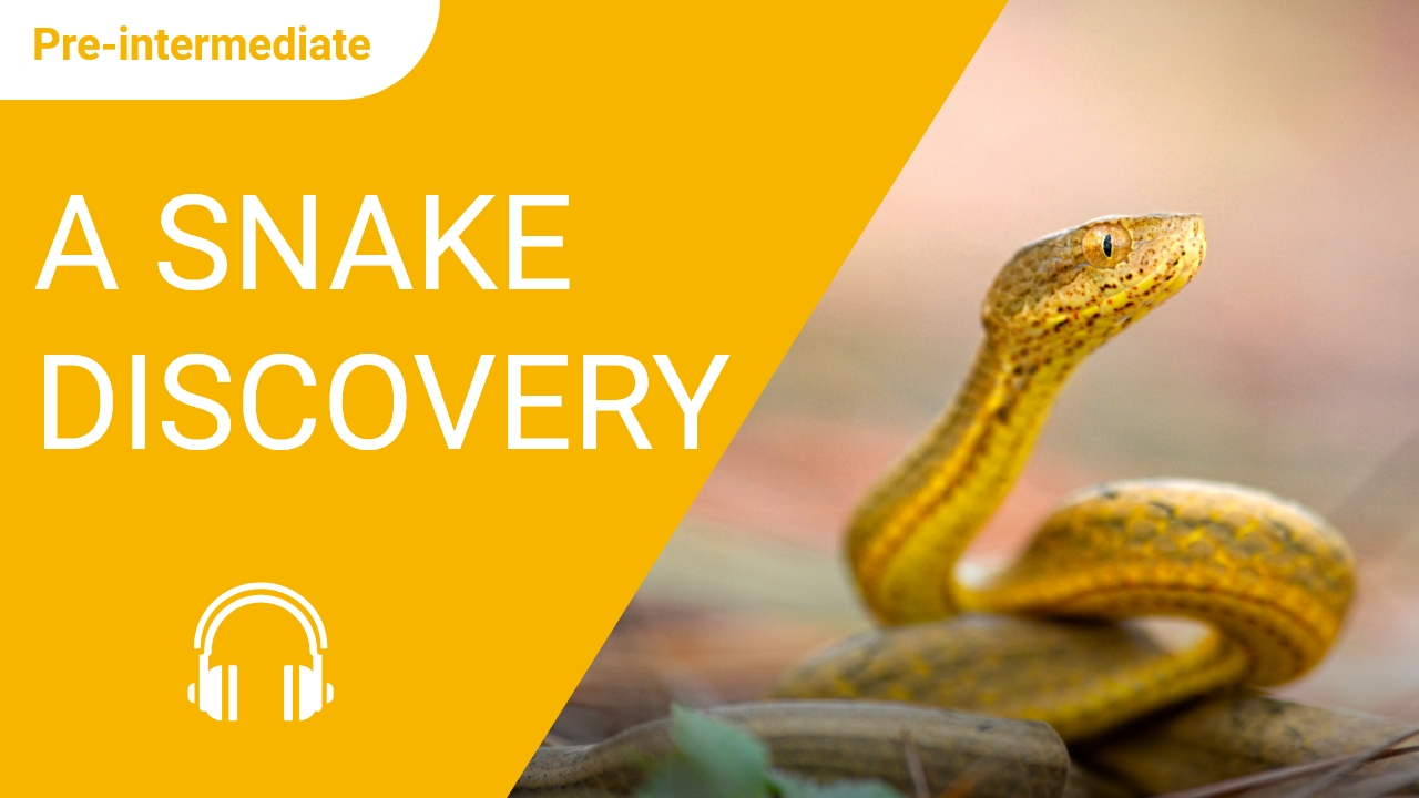 A Snake Discovery