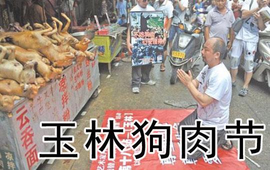 玉林狗肉节