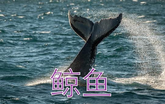 鲸鱼不是鱼