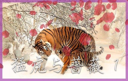 猛虎与蔷薇 Part 1