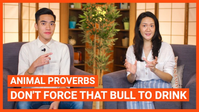 Animal Proverbs: Don't Force That Bull To Drink