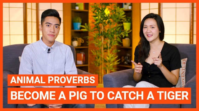 Animal Proverbs: Become a pig to catch a tiger
