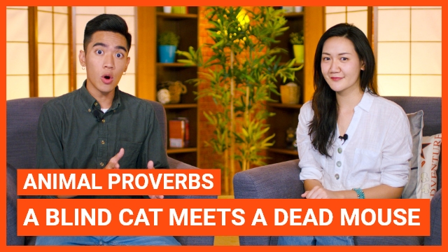 Animal Proverbs: A blind cat meets a dead mouse