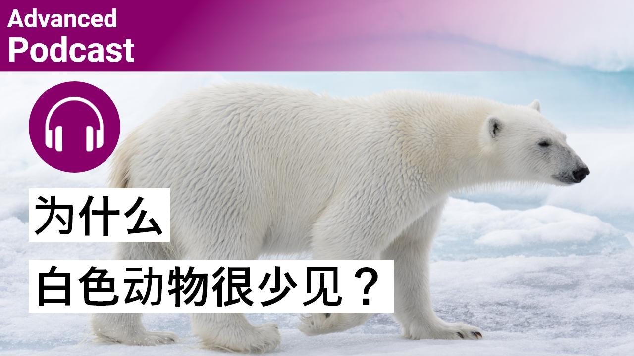 科普小知识:为什么白色动物很少见?