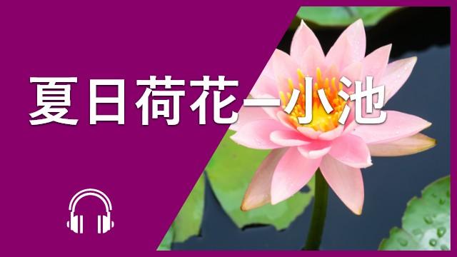 Summer Poem 夏日荷花—小池